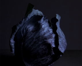 Red cabbage | Blue hour