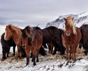 Ice and horses