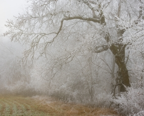 fog and ice