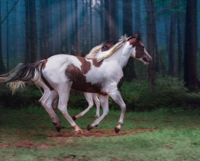Paint Horse in freedom - Ballet